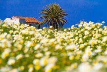 Cran Canaria