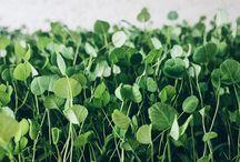 smågrønt microgreens