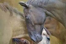 Jewelry: horses