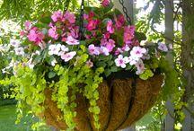 kytky a truhliky