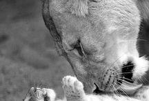 I ❤ lion