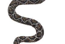 hadi z korálků