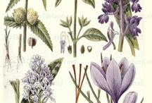 botanical  vintage