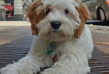 dog love / by Renee Dawson
