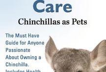 Owning a chinchilla