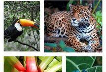 Teaching: Rainforest
