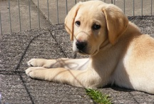 Dogs - Great Pictures / Great pictures of dogs we have found on Pinterest and the internet.
