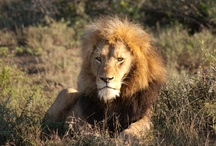 Safari / Seeking the Big Five? Enter the world of astonishing creatures and browse exclusive safari tours, best game reserves, top safari lodges and more.