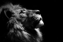 ADPi and Lions / by Teresa Huddleston Tronnes