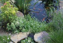 backyard idea's -ponds etc