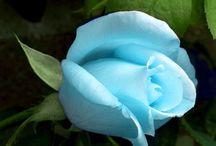 美しい花 2