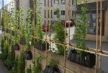 vegatable gardens