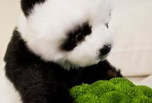 """WWF Green package / Danubius Hotels Group donates 5% from the income of every """"WWF Green package"""" to World Wildlife Foundation Hungary. Guests choosing the """"WWF Green package"""" will be involved in our prize braw to win a WWF Adoption package."""