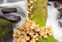 fungi - гъби
