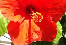 Giotas garden / flowers