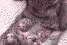 Rabbits' world