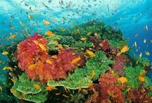 Underwater word (podwodny swiat)