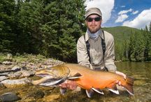 BULL TROUT / Fly fishing for bull trout.  Bull trout on the fly.