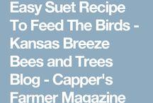 Bird feeders food and birdbaths ( squirrels )