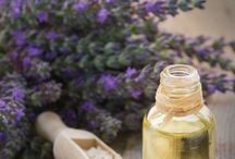 Growing herbs indoors / Gardening