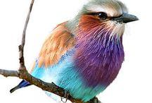 birdie,  birdie in the sky