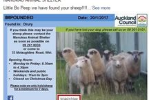 New Zealand Lost Pet Register