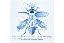 Vintage Entomology / vintage illustrations of insects / by monica kay