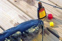 Fishing / Fishing \ Fish