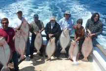 Sea Jay Sportfishing