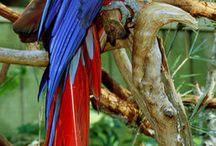 Παπαγάλοι -Parrots