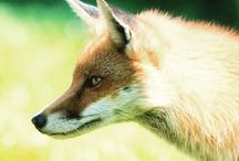 FUR FREE FRIDAY / by Last Chance for Animals
