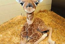 baby animals :) / her şey mi küçükken güzel? :)