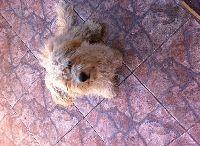 Adopción de Mascota / Acá encontrarás Mascotas que se dan en Adopción! Más detalles en www.buscomascota.cl/adopcion-mascota/