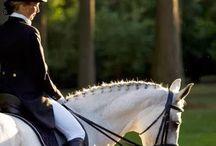 I want horse!