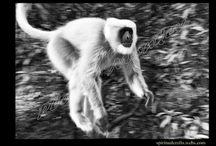 On Planet Monkey