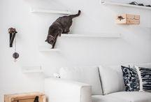 Cat interior