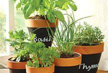 Gardening, plants, DiYs