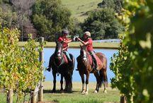 Discover the Mornington Peninsula / The Best Attractions on the Mornington Peninsula
