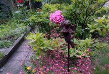 plante au pied d un rosier