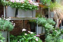 garden envy