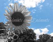 Oddments and Endments