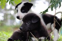 Active Lapland / Dogsledding in Swedish Lapland