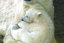 Mamák és kicsinyek