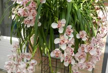 orchids / I'm not good with orchids but some are simply easier than others. Shall we try our hand at this?