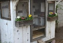 Chook shed