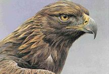 Eagle/Arend