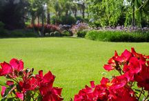 Floral Lawns / Fresh lushness on a hot summers day