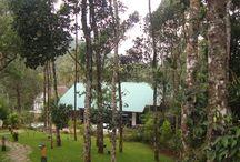 Cardamaom Club Plantation Resort - Thekkady/Kerala / Cardamaom Club Plantation Resort - Thekkady/Kerala