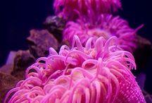 colour {pink}