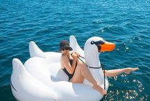Swan's LIfe / by Chris Meinke